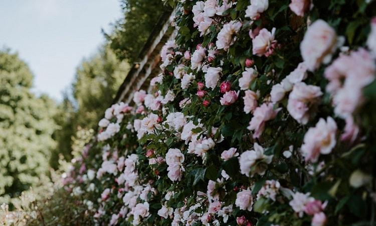 Aménager son petit jardin - Article MDi
